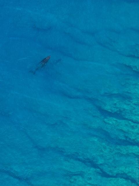 Île de la Réunion : baleine et son baleineau